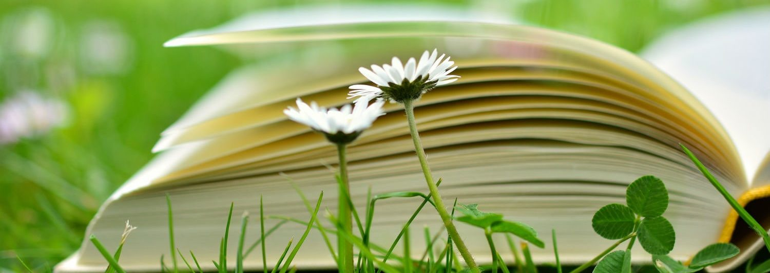 book in a meadow